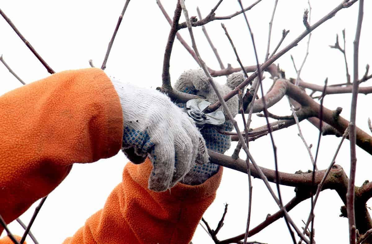 baeume-schneiden-winter