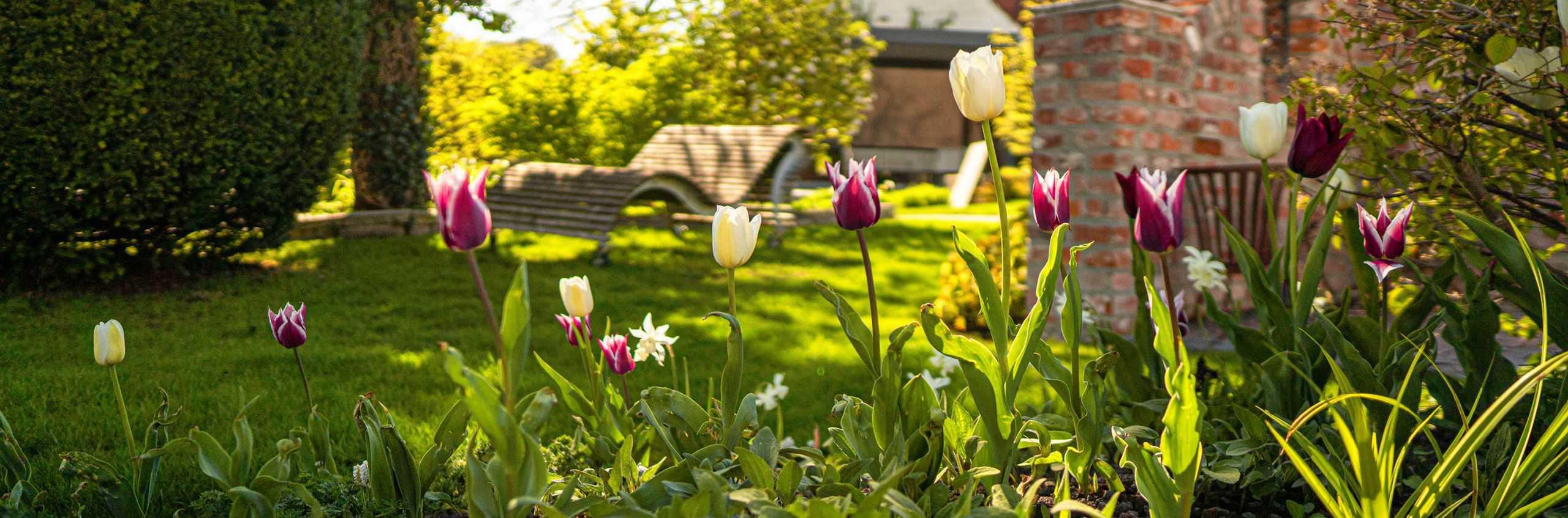 Bepflanzung Garten Mit Tulpen Bullinger
