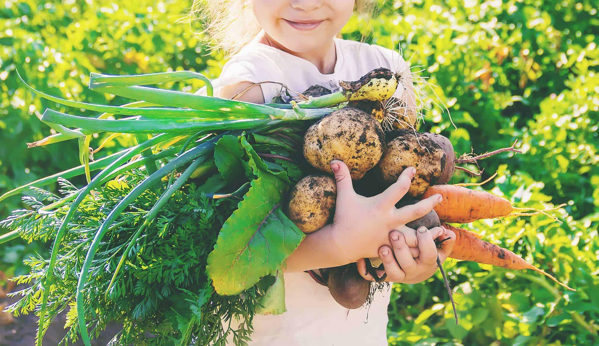 Selbstversorger Gemüse